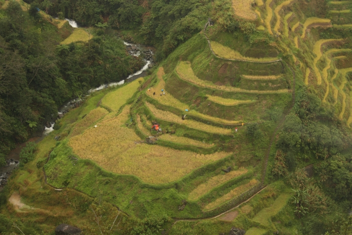 Banaue- Rice Terraces